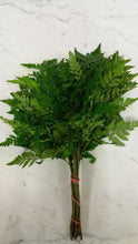 Greens - Leather Leaf Fern  - Bunch