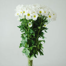 Pom Poms - Daisy - White  - Bunch