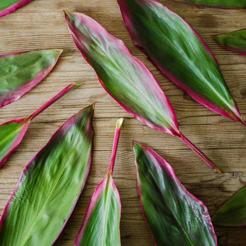 Greens - Ti Leaves (red)  - Bunch