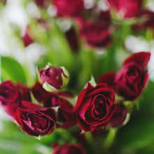 Spray Roses - Red  - Bunch