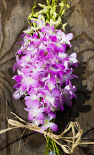 Orchids - Dendrobiums - Misteen  - Bunch
