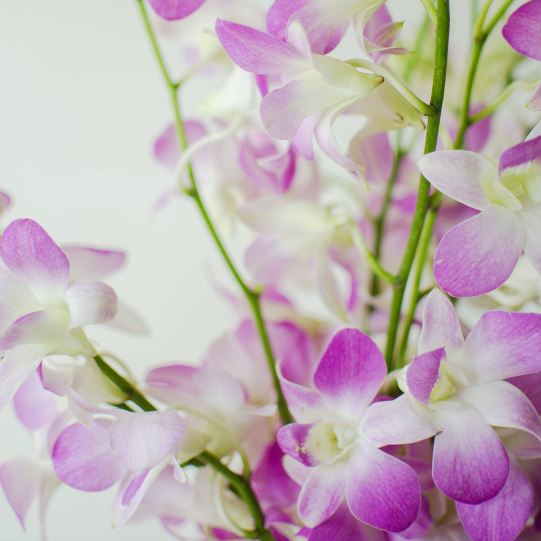 Orchids - Loose Blooms - Missteen
