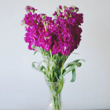 Stock - Hot Pink  - Bunch