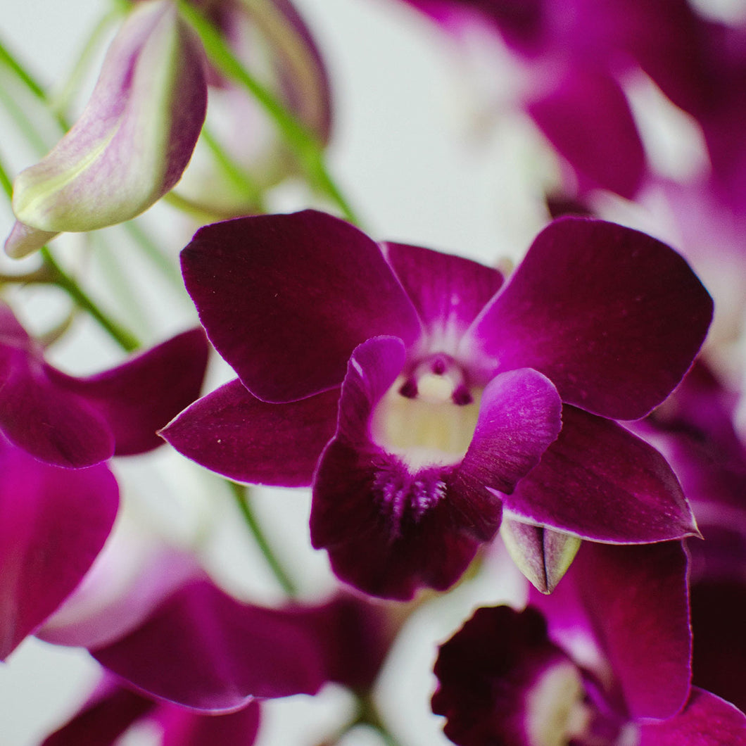 Orchids - Loose Blooms - Purple