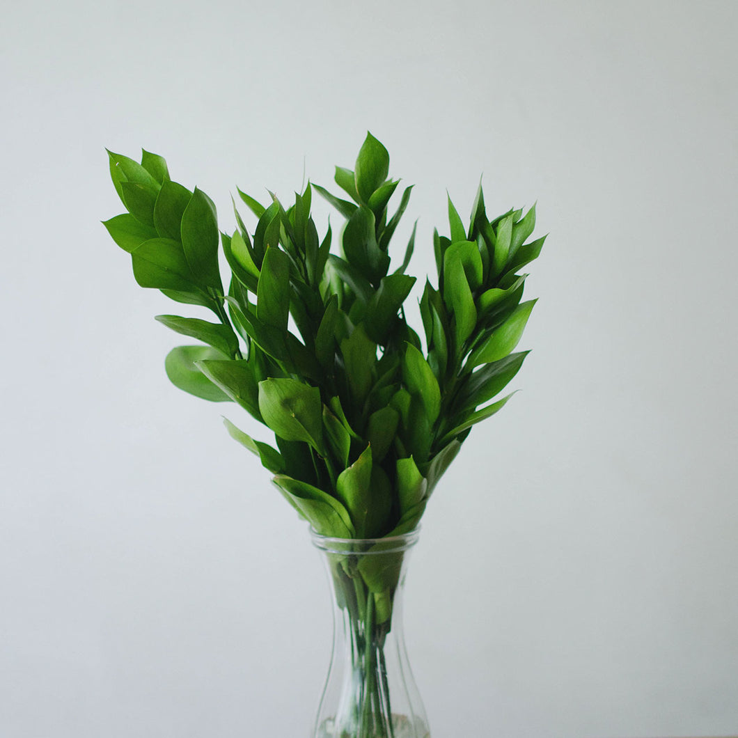 Greens - Italian Ruscus  - Bunch