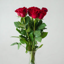 Roses - Red  - Bunch