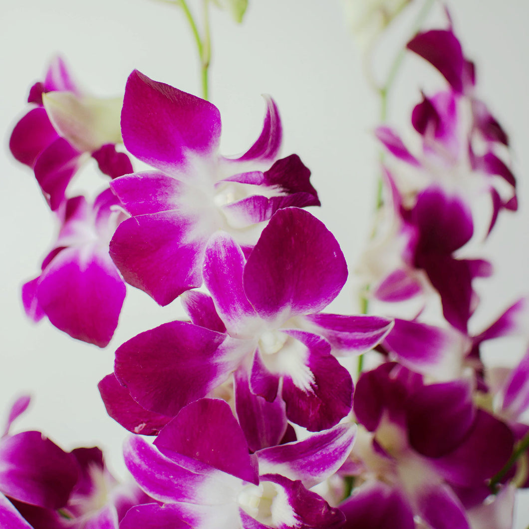 Orchids - Loose Blooms - Bombay