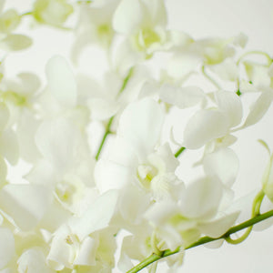 Orchids - Dendrobiums - White  - Bunch