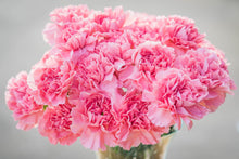 Carnations - Pink  - Bunch