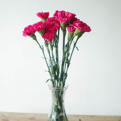 Carnations - Hot Pink  - Bunch