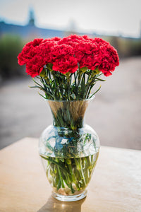 Carnations - Red  - Bunch