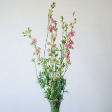 Larkspur - Pink  - Bunch