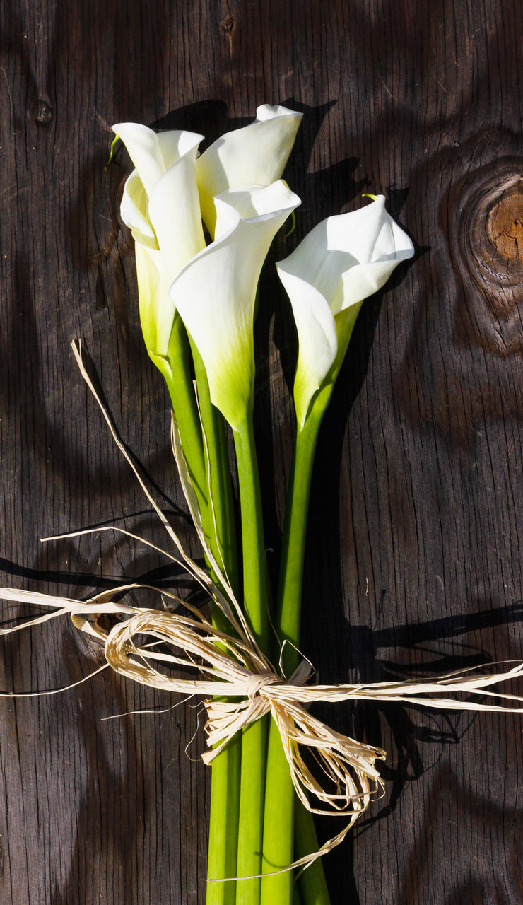 Calla Lilies - Large - White