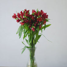 Alstroemeria - Red