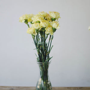 Carnations - Yellow  - Bunch