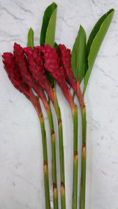 Ginger - Red  - Bunch