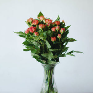 Spray Roses - Orange  - Bunch