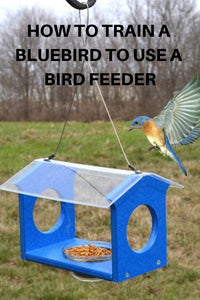 How To Train Bluebirds