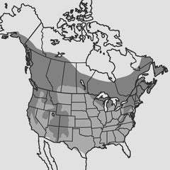 Red-Breasted Nuthatch Map