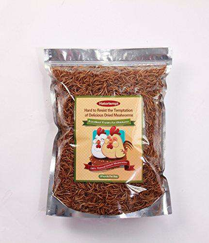 Hatortempt Dried Mealworms 2lbs - World of Birdhouses