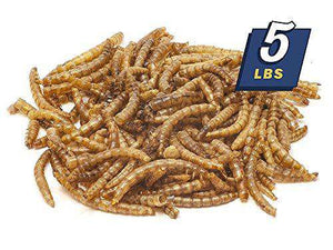 MBTP Bulk Dried Mealworms - (5 Lbs) - World of Birdhouses