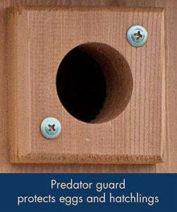 Audubon Coppertop Cedar Wood Bluebird House - World of Birdhouses