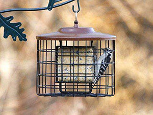 Squirrel Proof Suet Bird Feeder, 2 Suet Capacity, Brown - World of Birdhouses