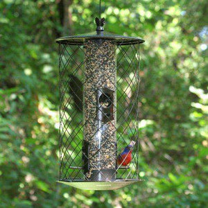 Perky-Pet The Preserve Wild Bird Feeder - World of Birdhouses