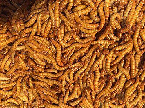 Bulk Live Mealworms - 1000 count (Large - 1