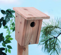 North States Bluebird House