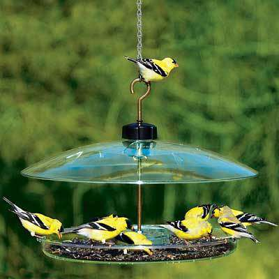 Droll Yankees Covered Platform Bird Feeder - World of Birdhouses