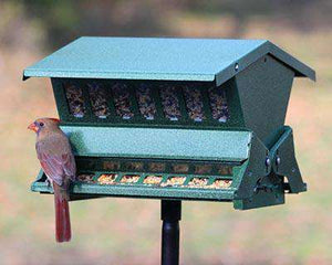 Double Sided Absolute II Bird Feeder with Pole & Hanger? - World of Birdhouses