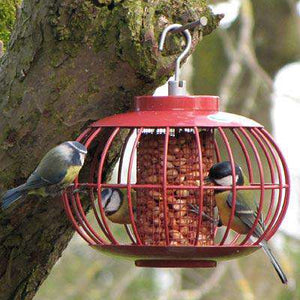 The Nuttery Classic Lantern Peanut & Sunflower Seed Feeder? - World of Birdhouses