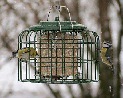The Nuttery Oval Suet Cake Feeder? - World of Birdhouses