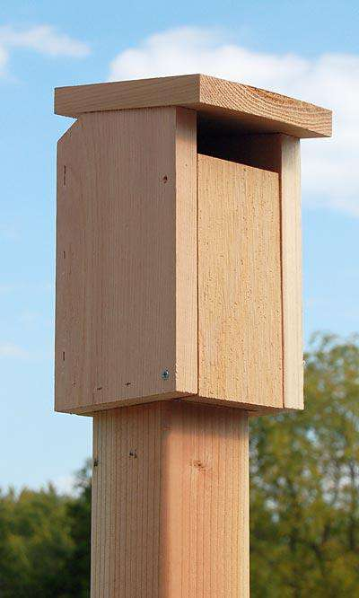 Songbird Essentials Sparrow-Resistant Bluebird House? - World of Birdhouses