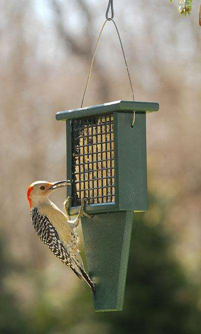 Songbird Essentials Suet Feeder with Tail Prop, Green♻️🚛