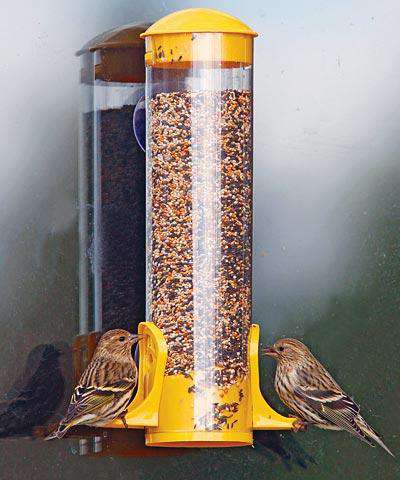 Stokes Window Finch Bird Feeder - World of Birdhouses