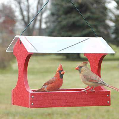 Woodlink Going Green Fly Through Bird Feeder, Red - World of Birdhouses