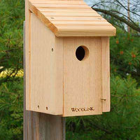 Woodlink Bluebird House🚛 - World of Birdhouses