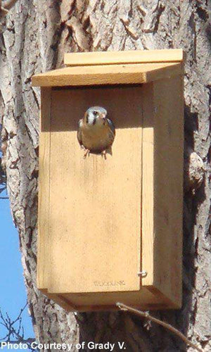 Woodlink Screech Owl & Kestrel House - World of Birdhouses