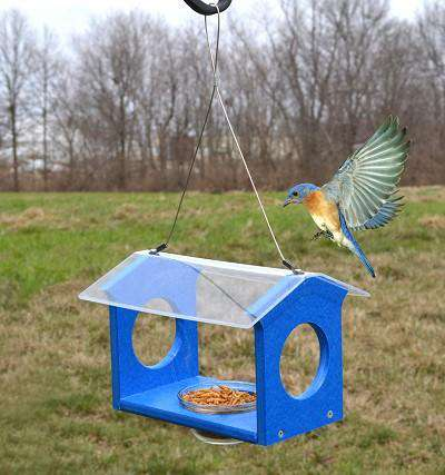 Songbird Essentials Bluebird Canteen Feeder♻️