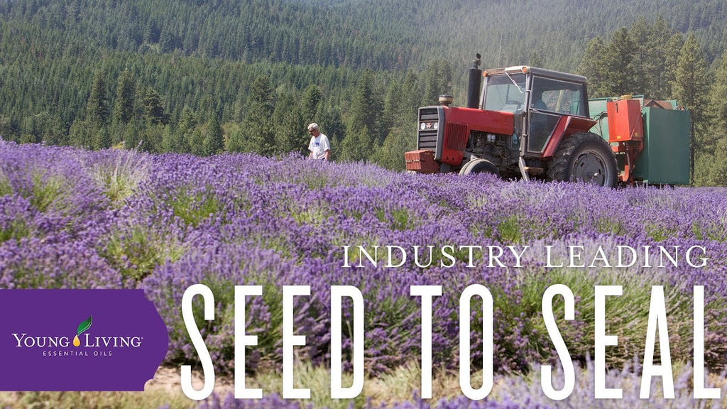 Young Living Essential Oils Seed to Seal