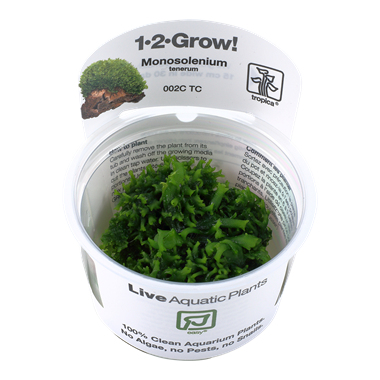 Tropica 1-2-Grow! Monosolenium Tenerum