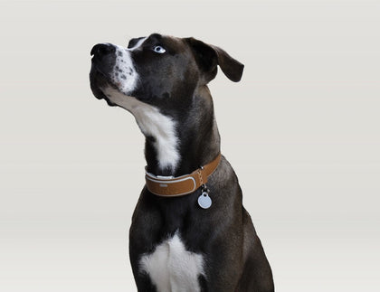 Pet Collars and Tags
