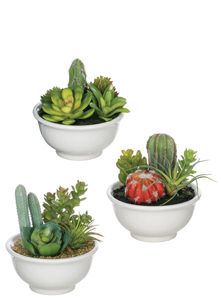 Potted Cactus in Bowl
