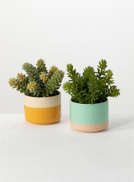 Potted Spring Succulents