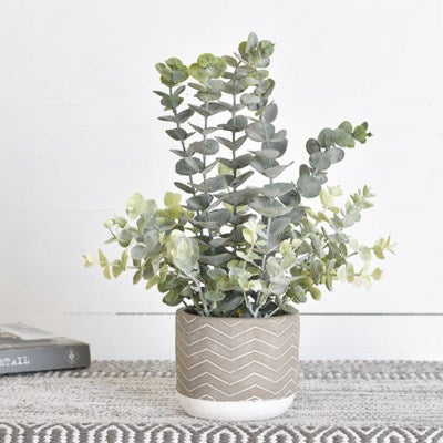 "16"" Eucalyptus in Cement Pot"