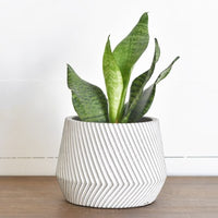 "6.5"" Carved Stripe Pot"