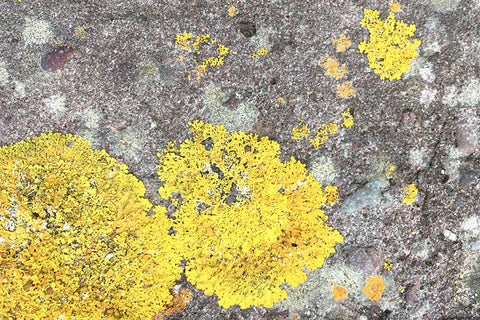 Yellow lichen on a grey rock that inspired Fiadh's Grey fleck interwoven with vibrant yellow 100% Merino wool scarf