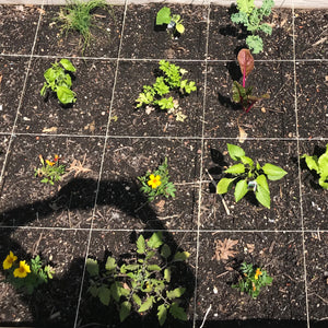 Garden Update - Square Foot Gardening